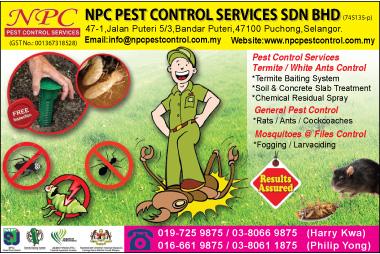 Pest Control Termite Control White Ants Control Pest