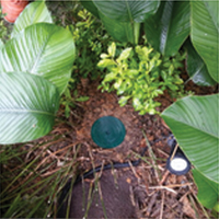 Installation Of Termite Tube - In Ground